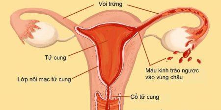 Hình ảnh lớp niêm mạc tử cung